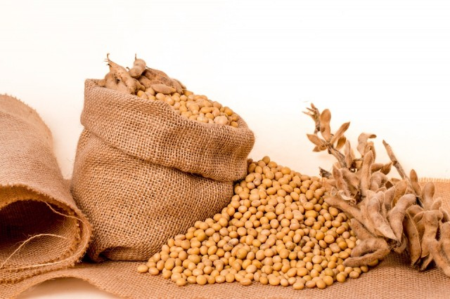 Grains Prices - Daily Grains Report - Weekly analysis